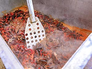 Crawfish Boils with New Orleans Airboat Tours, LLC
